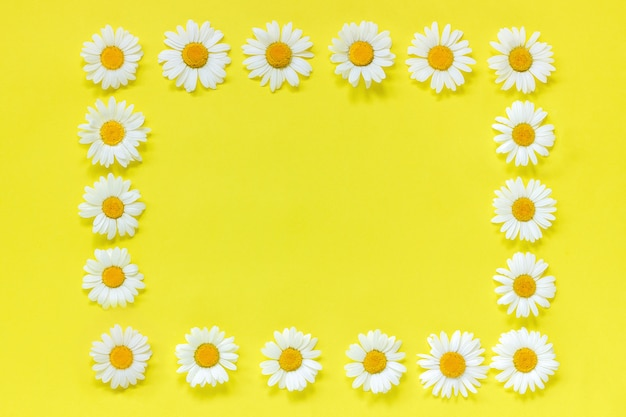 Frame floral rectangle wreath of flowers chamomile. copy space mock up template