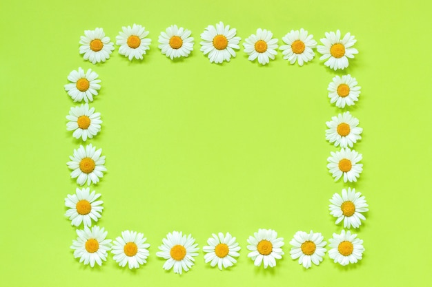 Frame floral rectangle wreath of flowers chamomile on green background. flat lay