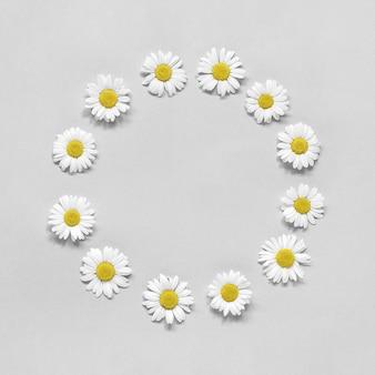 灰色の花のカモミールの花の丸い花輪をフレーム