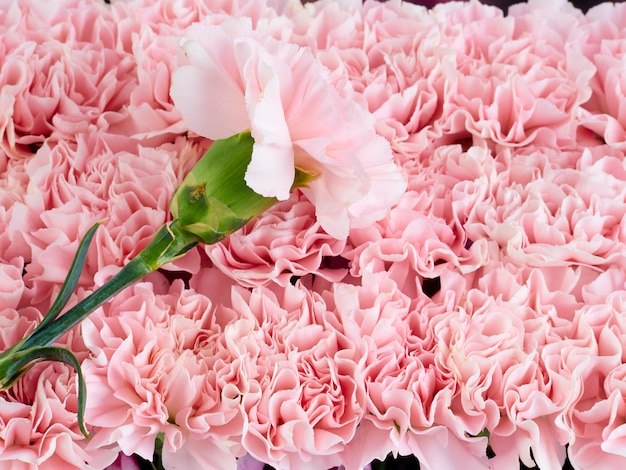 Frame flower made of pink carnations
