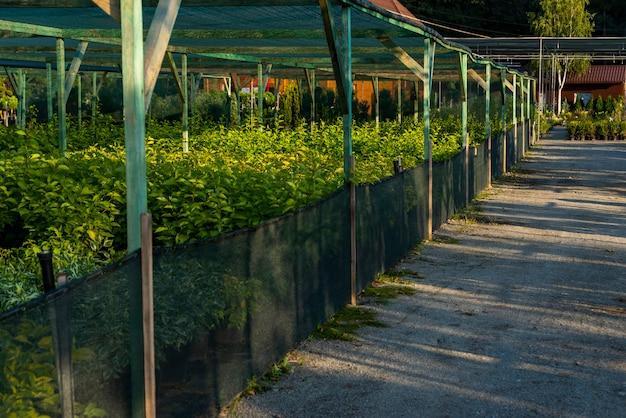 정원 중앙에 꽃을 만들기위한 격자가있는 식물 용 프레임
