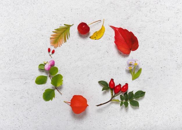 さまざまな秋の葉からのフレームは、円の形をしたベリーや花を残します