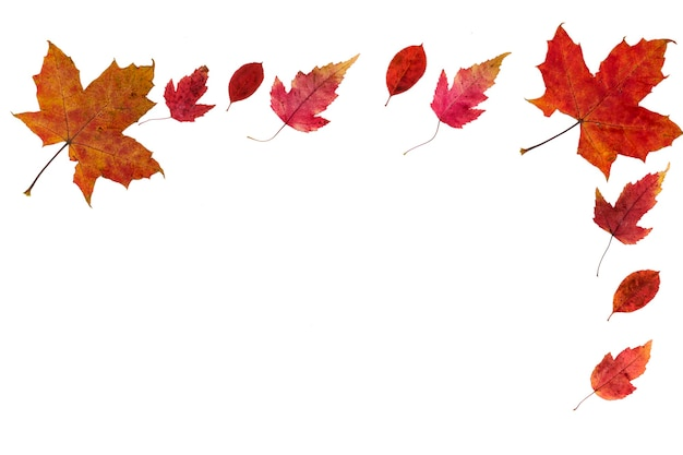 Frame from autumn red leaves of different types on a white background. horizontal photo