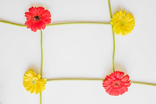 Frame from bright gerberas
