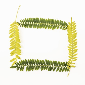 Frame from fern twigs
