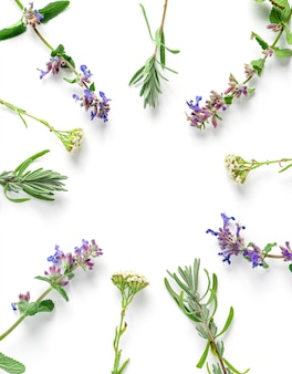 Frame from medicinal herbs on a white background, top view, flat lay, copy space.
