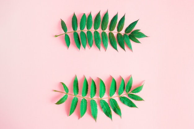 Frame of green leaves on pink background with copyspace  text.