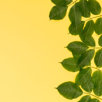Frame of leaves with yellow background