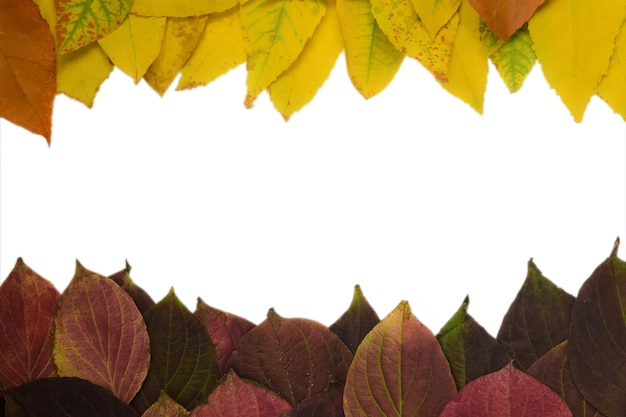 Frame made of autumn fallen leaves of different colors and shapes there is an empty white space in