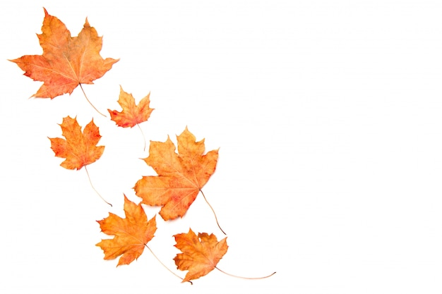 Frame made of autumn maple leaves isolated on white