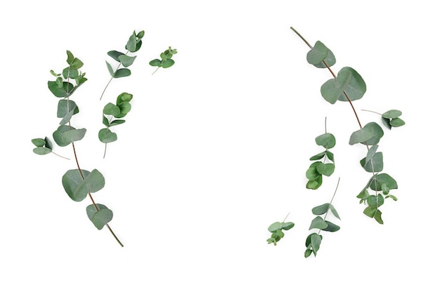 Frame made of eucalyptus branches on white background. flat lay, top view, mock up.