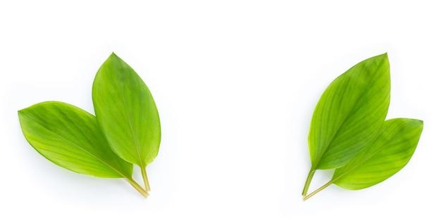 Frame made of finger root leaves on white background.