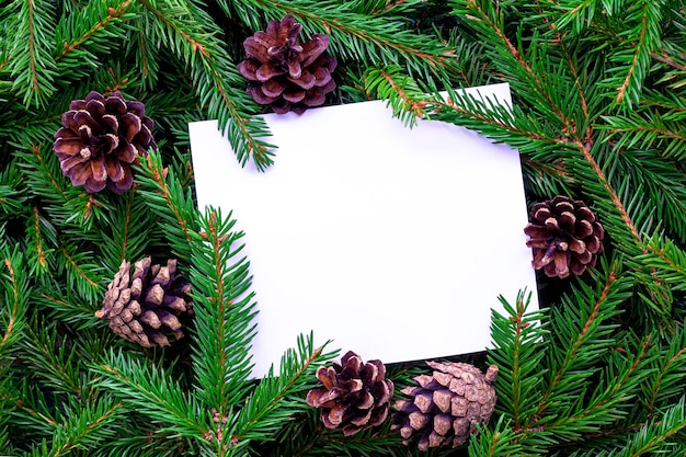 Frame made of fir branches and pine cones. white blank sheet of paper lies on a background of green