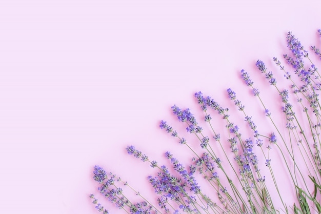 Frame made of fresh lavender flowers flat lay,