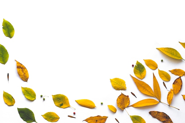 Frame made from autumn dried leaves on white background.