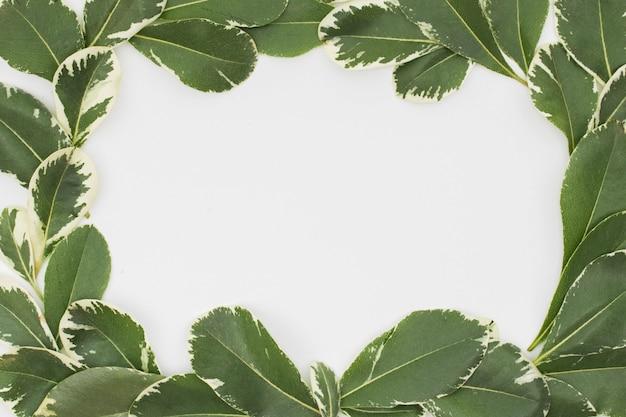 白い背景の上の新鮮な葉から作られたフレーム