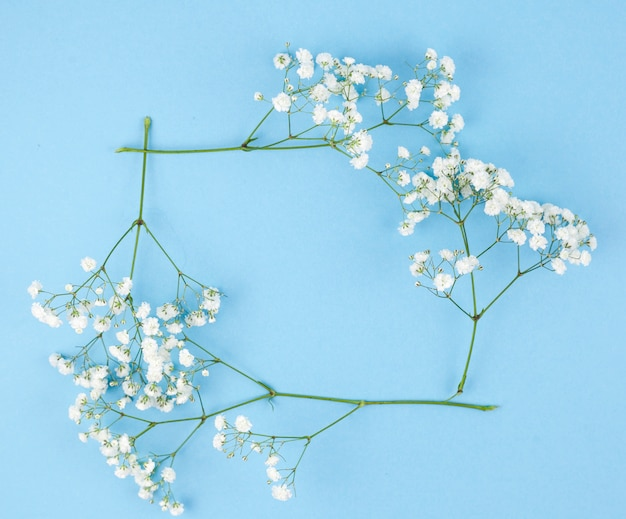 Frame made from white gypsophila on turquoise background