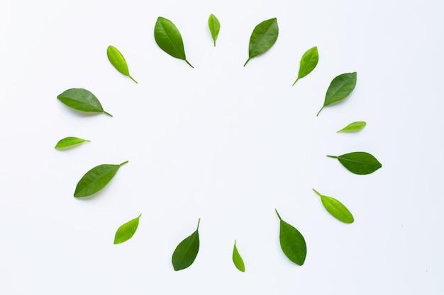 Frame made of green citrus fruit leaves on white