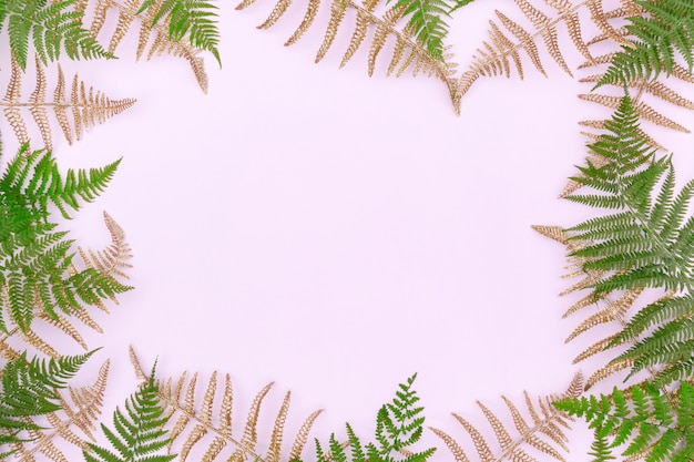 Frame made of green golden fern leafs frond on light background