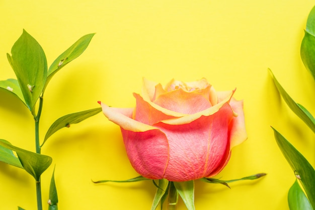 Frame made of green leaves and pink rose on yellow background. flat lay, top view, copy space