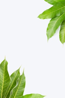 Frame made of mango leaves on white background