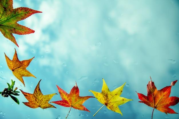 青い空を背景に紅葉で作られたフレーム