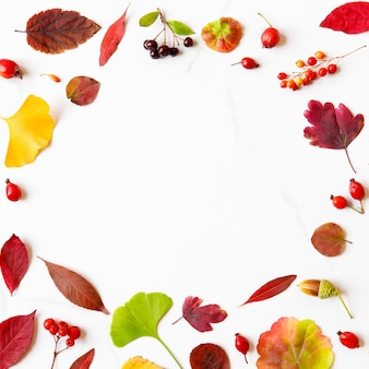 단풍으로 만든 프레임-자작 나무, 일본 단풍 나무, 은행 나무, 제라늄, 매자 나무 열매, 도토리, 마가목, 흰색 대리석 배경에 산사 나무속