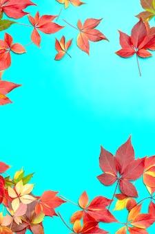 青いグラデーションの秋の赤い色とりどりの葉で作られたフレーム