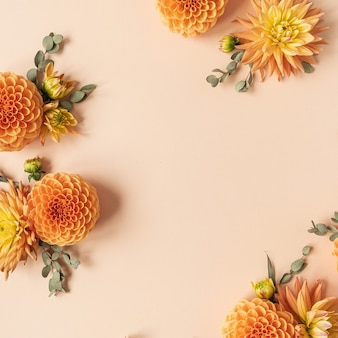 복숭아 파스텔 배경에 아름다운 생강 달리아 꽃 봉오리로 만든 프레임. 플랫 레이