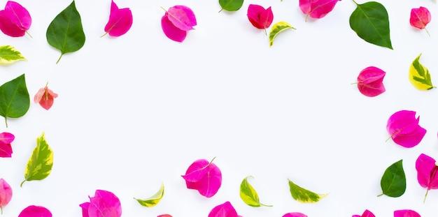 白い表面に葉を持つ美しい赤いブーゲンビリアの花で作られたフレーム