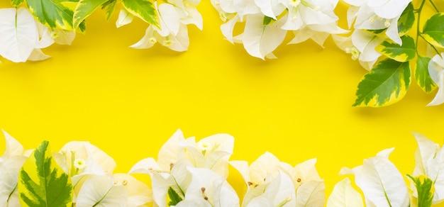 黄色の表面に葉を持つ美しい白いブーゲンビリアの花で作られたフレーム