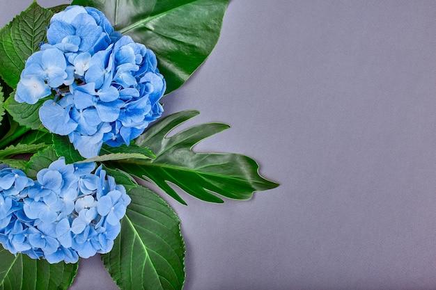 Рамка из голубой гортензии и зеленых листьев на синем фоне
