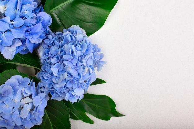 Рамка из голубой гортензии и зеленых листьев на белом
