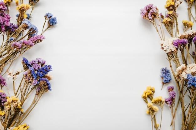 Рамка из засушенных цветных цветов на белом