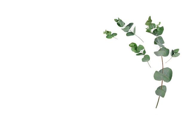 白い背景の上のユーカリの枝で作られたフレーム。フラットレイ、上面図、モックアップ。
