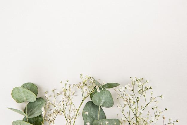 緑のユーカリポプラの葉と白い背景のカスミソウで作られたフレーム。花の組成。フェミニンなスタイルのストックフラットレイ画像、上面図。コピースペース
