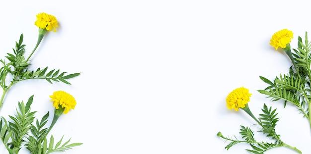 흰색 바탕에 잎이 있는 금잔화로 만든 프레임입니다.