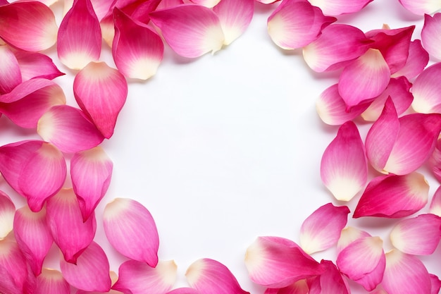 Frame made of pink lotus petals flower on white background.