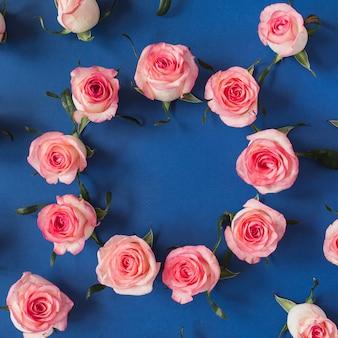 Frame made of pink rose flower buds on blue surface