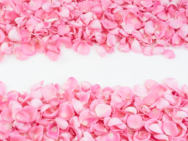 Frame made of pink rose petals