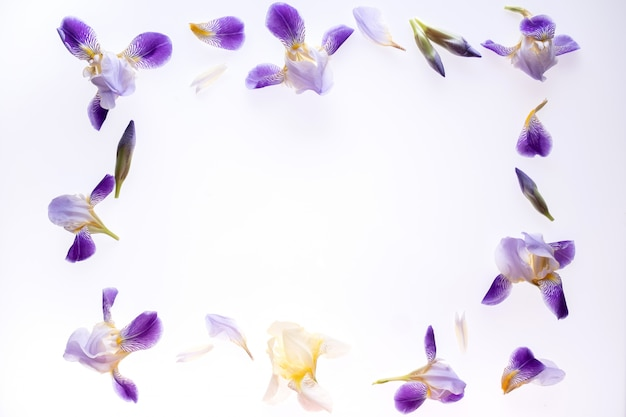 Frame  made of purple iris  flowers on white. flat lay, top view.
