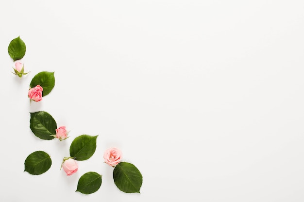 Frame made of small beautiful rose buds over white background