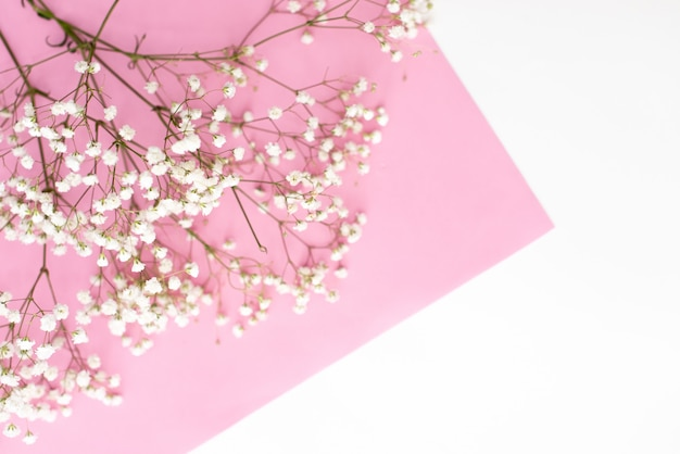Frame made of small white flowers on pastel pink background.