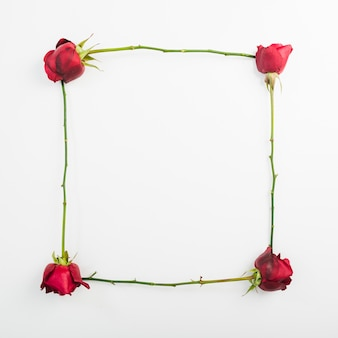 Frame made with roses on white background