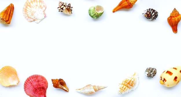 白い背景に貝殻で作られたフレーム。夏の背景コンセプト