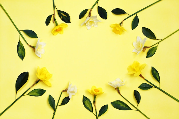 Frame of narcissus or daffodil flowers on yellow background