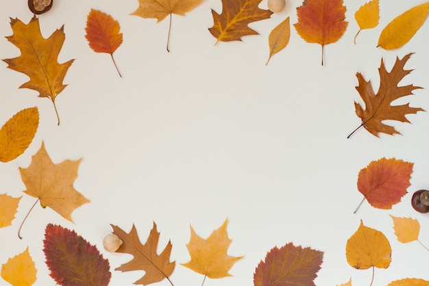 베이지색 배경에 복사 공간이 있는 가을 낙엽 프레임