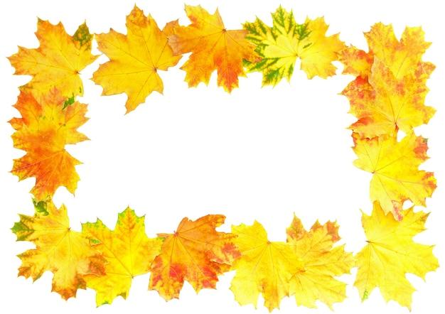 白の上の秋の葉のフレーム。孤立