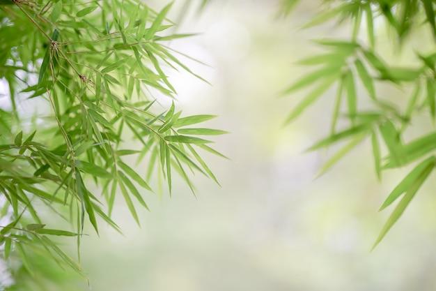 竹のフレームは風に揺れる緑色を残します。言葉遣いのためのスペースをコピーします。