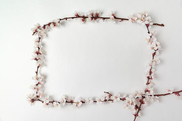 Кадр из цветущих абрикосовых ветвей на белом фоне. шаблон. фон. макет.